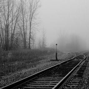 Unknown Destination by Michael Velardo - Transportation Trains ( railroad switch, train tracks, black and white, fog, trees, misty,  )
