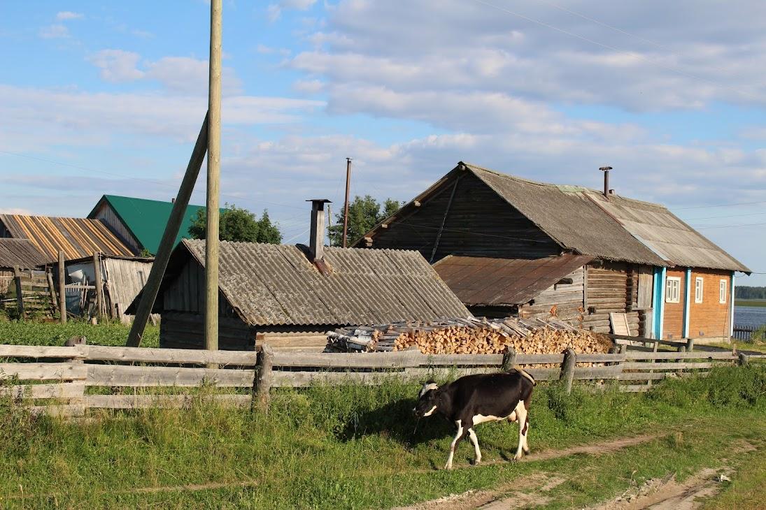 Июль 2018. Месяц на Севере. Кенозерский национальный парк, Транскенозерская тропа фотоистория
