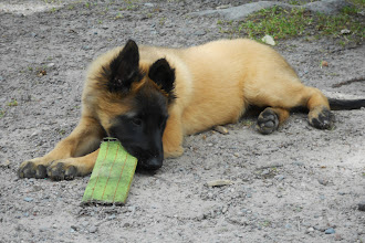 Foto: Maia börjar bli trött...