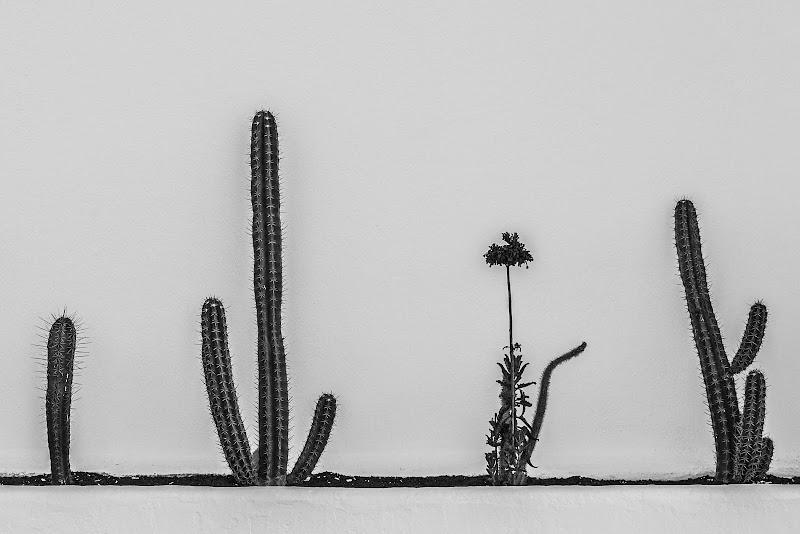 Vita minimalista di FilippoColombo