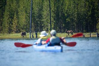 Photo: Sea kayakers watching elk. Jackson Lake Grand Teton National Park, WY.