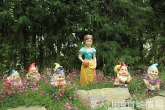 Photo: 拍攝地點: 梅峰-溫帶花卉區 拍攝植物: 美女石竹 拍攝日期:2012_05_26_FY