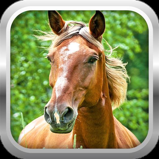 模擬必備App|3D馬模擬器遊戲免費 LOGO-綠色工廠好玩App