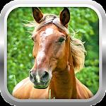 3D Horse Simulator Game Free 1.0 Apk