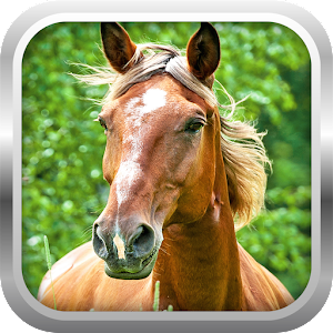 3D Horse Simulator Game Free