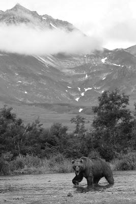L'orso in montagna di Sgheno