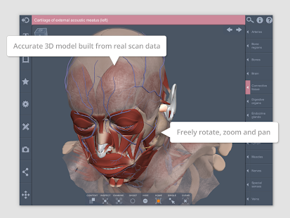 Head And Neck 3d Rt Sub Apps On Google Play