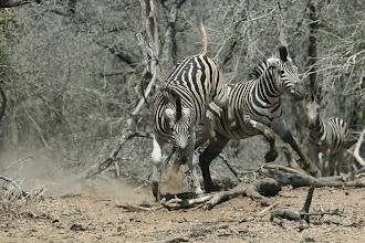 Photo: Mkhuze Game Reserve