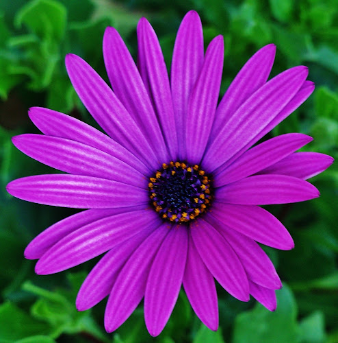 Purple Flower by Sarah Harding - Novices Only Flowers & Plants ( colour, macro, nature, novices only, flower,  )