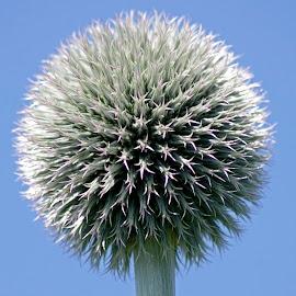 Unusual by Ingrid Anderson-Riley - Flowers Single Flower