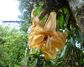 Photo: Orquidea Amazonas