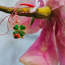 Four Leaf Clover Charm by Michael Schwartz - Uncategorized All Uncategorized ( lucky, spring, charm, clover, ladybug,  )