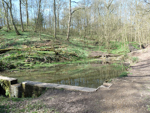 Photo: Pond in Northcliffe Wood Shipley