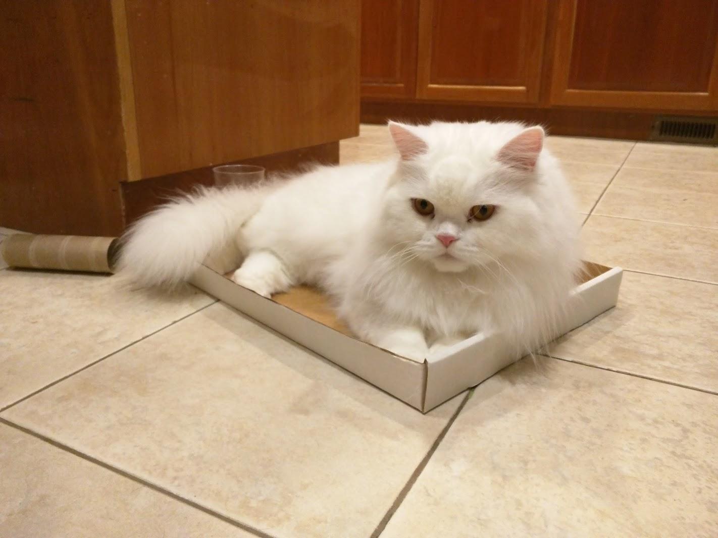 Mimi-man in a box