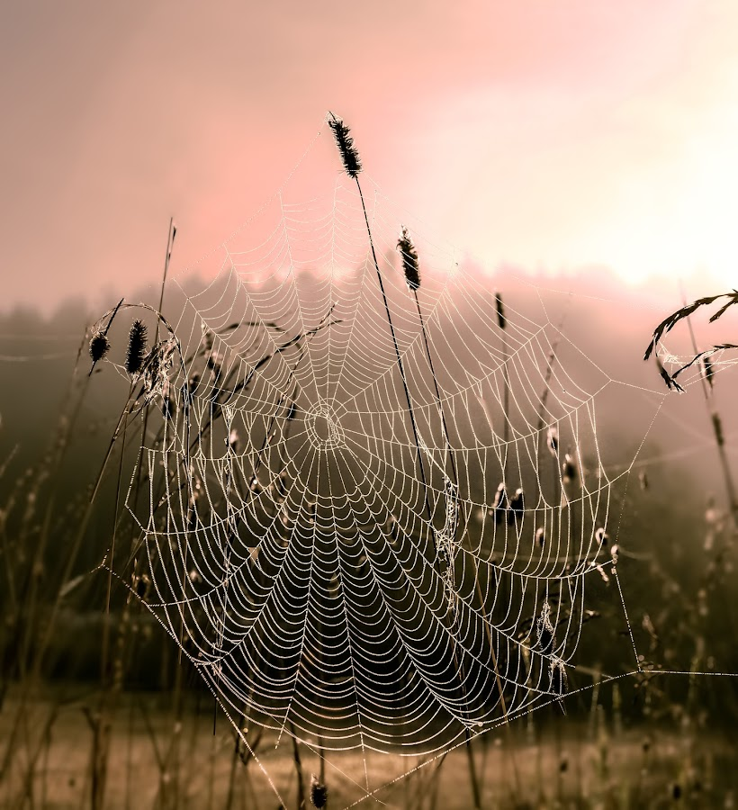 An artist's art by Rose-marie Karlsen - Nature Up Close Webs ( nature, sunset, rain drops, sunrise )