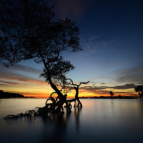 Mangrove by Harris Rinaldi - Landscapes Waterscapes