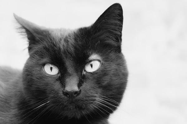 Occhi di gatto di Obscurenotion