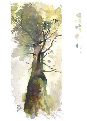 stage aquarelle sur le motif  foret de Fontainebleau  thème mousses et lichens  avec Jeanne PAPA Aquarelliste