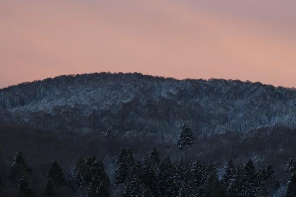 Il gelido tramonto dei faggi di al900
