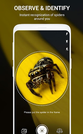 Download Spiders Identifier App By Photo Camera 2020 Free For Android Spiders Identifier App By Photo Camera 2020 Apk Download Steprimo Com