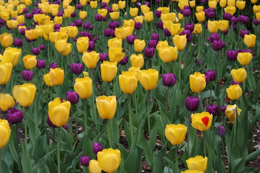 by Dennis Granzow - Nature Up Close Gardens & Produce ( pwcflowergarden )