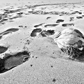 Footprints by Boy De Nova - Landscapes Deserts