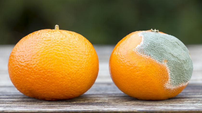 Naranjas con moho. Foto: OCU