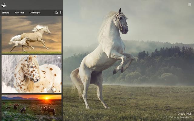 . My Horses   Beautiful Horse HD Wallpaper