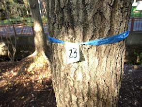 Photo: 玉川上水遊歩道の伐採予定地。伐られる予定の木に番号が振られている。