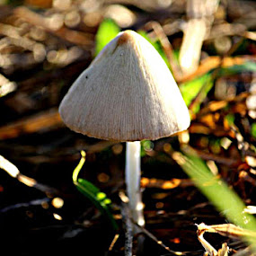 i'm alone by Esha Darmawan - Nature Up Close Mushrooms & Fungi