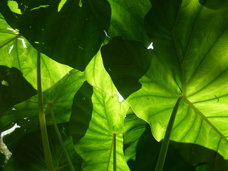 ombrelli verdi di francescafotog