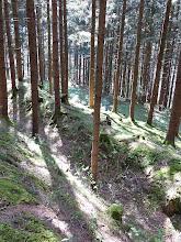 Photo: Wallgraben,darunter die Forststrasse