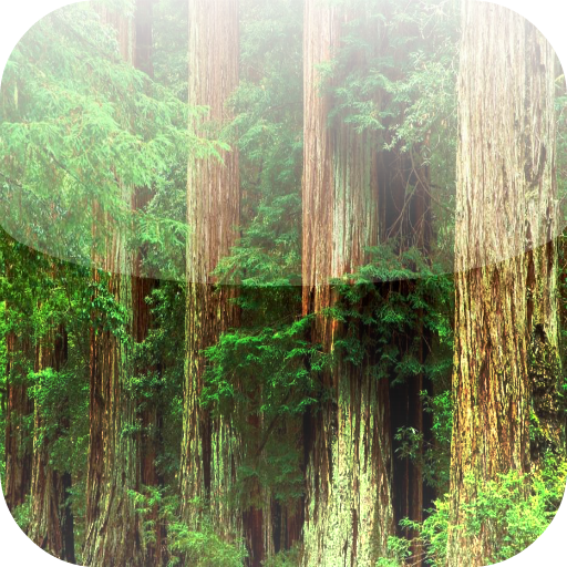 Wallpapers Trees