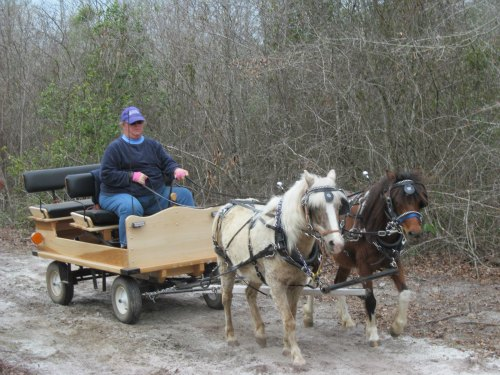 Bit & Cassie driving to wagon @ Draft Horse Plow Day