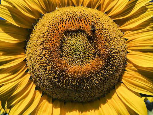 Come il sole di Francesca Corti