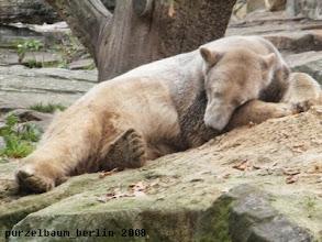 Photo: Zeit fuer ein Nickerchen, meint Knut ;-)