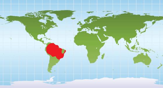 Green anaconda range map
