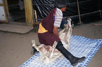 Photo: 03387 ブルド/ハスバター家/羊の解体