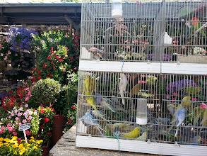 Photo: Marche aux fleurs - flowers & bird market