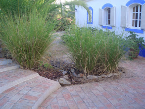 Photo: PORT_individual home landscaping