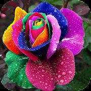 App Exotic Flowers APK for Windows Phone