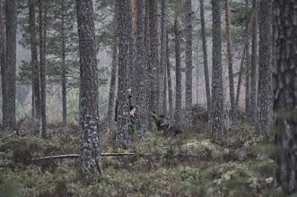 Photo: Kahn melder på figurant Jan Ståle
