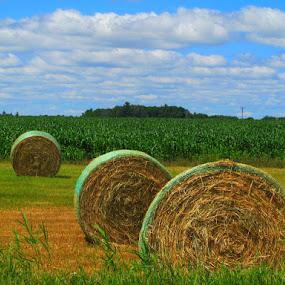 by Dawn Price - Landscapes Prairies, Meadows & Fields (  )