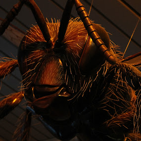 I Live in Your Nightmares by Julie Drohan - Animals Insects & Spiders ( nightmare, bug, insect, antenna, giant )