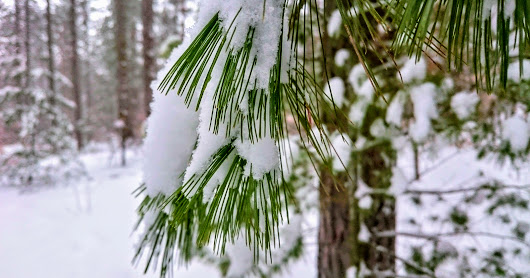 Snow Day - Snowshoeing in Ganaraska Forest, 12-Feb-2017