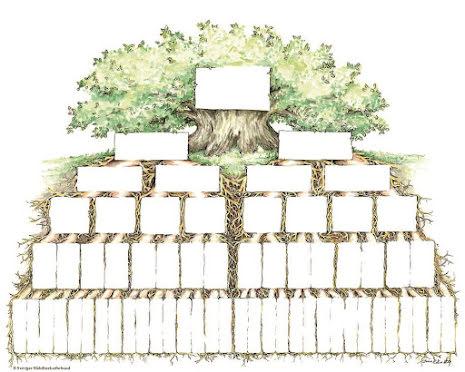 Släktträd rötter