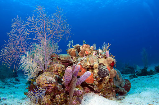 The spectacular coral reefs of Roatan, Honduras, make up the second largest barrier reef in the world.