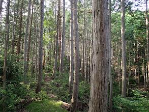 気持ちの良い林に