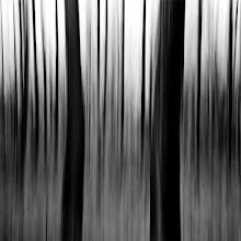 "Photo: The shadows dance The culprits fall The cold brings shadows They dance and fall (Anathema, Where Shadows Dance)  ""Real"" blur (camera motion, shutter speed: 1/40 sec.)  #blackandwhite   #blackandwhitephotography   #abstract"