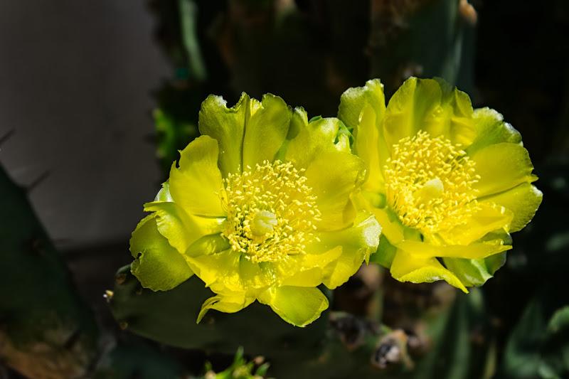 giallo di coppia di galubio52